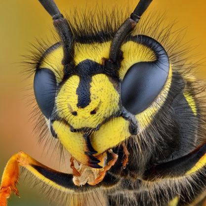 Wasp exterminator